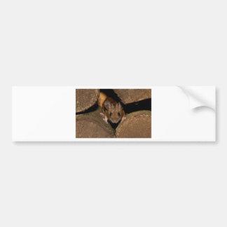 Peanut the Wood mouse Bumper Sticker