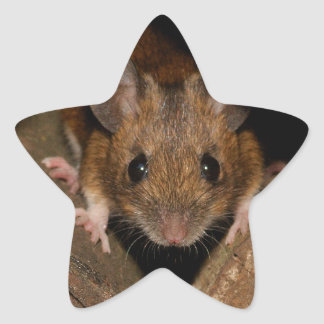 Peanut the Wood mouse Star Sticker