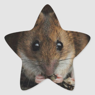 Peanut the Wood Mouse Star Stickers