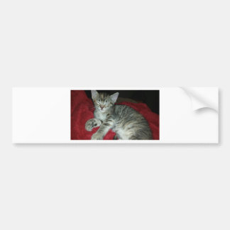 Peapicker kitty bumper sticker