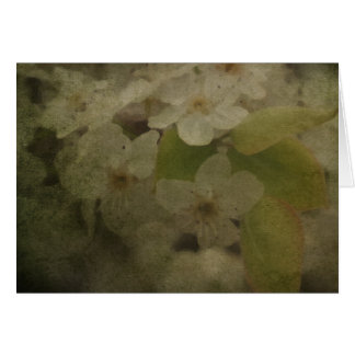 Pear Blossoms 2 Card