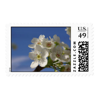 Pear Blossoms Stamps
