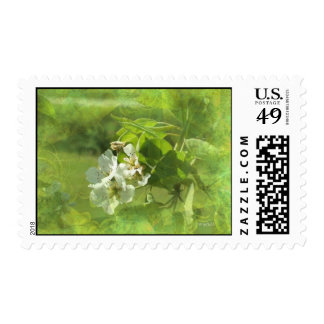 Pear Blossoms Postage