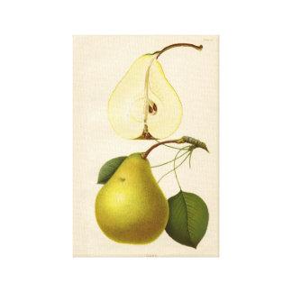 Pear Botanical Canvas Vintage Kitchen Wall+art