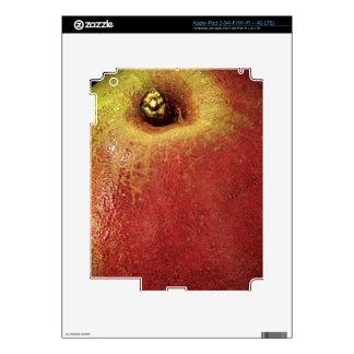 Pear (Close-up) iPad 3 Decals