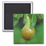 Pear Conference magnet