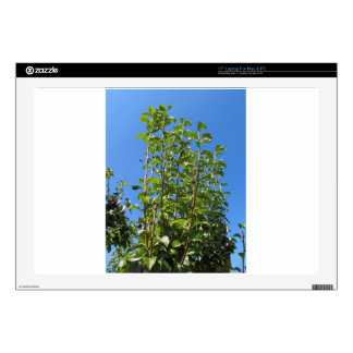 """Pear tree branches 17"""" laptop decal"""