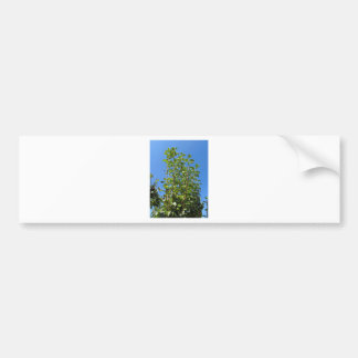 Pear tree branches bumper sticker