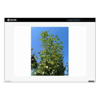 """Pear tree branches decal for 15"""" laptop"""