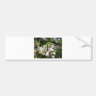 Pear tree branches with blossoms bumper sticker