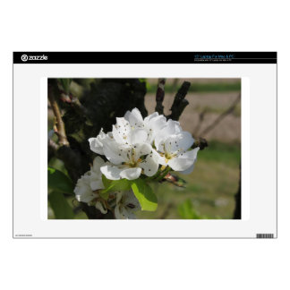 Pear tree branches with blossoms in Tuscany, Italy Skin For Laptop