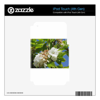 Pear tree branches with blossoms skin for iPod touch 4G
