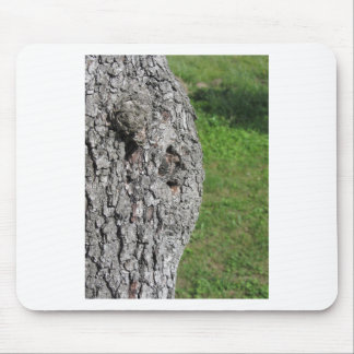 Pear tree trunk against green background mouse pad
