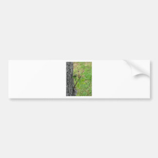 Pear tree twig with buds in spring  Tuscany, Italy Bumper Sticker