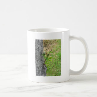 Pear tree twig with buds in spring  Tuscany, Italy Coffee Mug