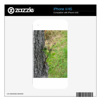Pear tree twig with buds in spring  Tuscany, Italy iPhone 4 Skins