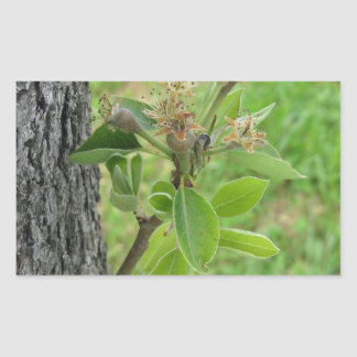 Pear tree twig with buds in spring  Tuscany, Italy Rectangular Sticker