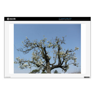 """Pear tree with blossoms against the blue sky 17"""" laptop decals"""