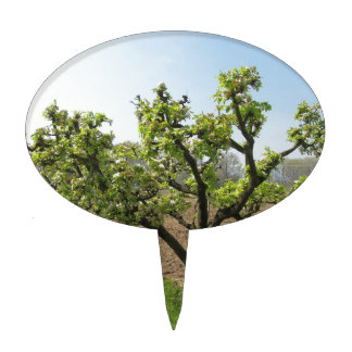 Pear tree with blossoms in a sunny day in Tuscany Cake Topper