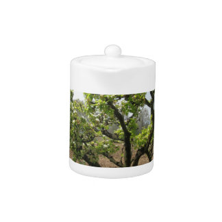 Pear tree with blossoms in a sunny day in Tuscany Teapot