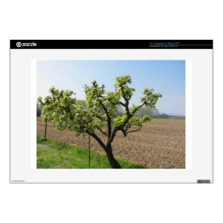 Pear tree with blossoms in a sunny day skins for laptops