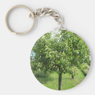 Pear tree with green leaves and red fruits keychain