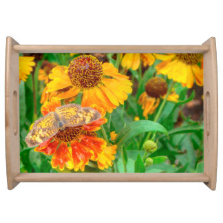 Pearl Crescent Butterfly on Sneezeweed Serving Tray