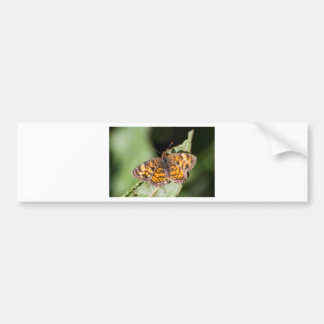 Pearl Cresent Butterfly- Phyciodes tharos Bumper Sticker