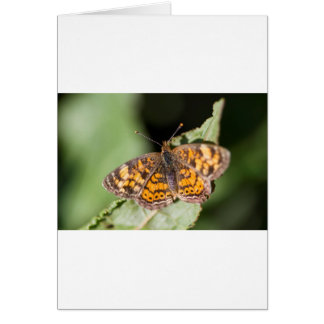 Pearl Cresent Butterfly- Phyciodes tharos Card