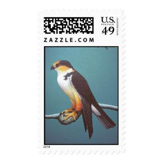 Pearl Kite Postage