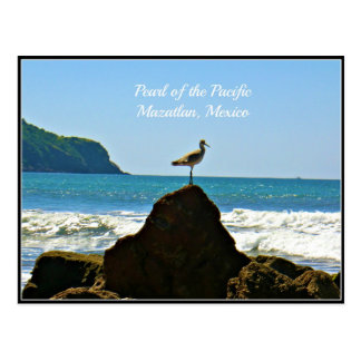 Pearl of the Pacific, Mazatlan Mexico Seagull Card