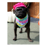 Pearl - Pug and Boston Terrier Mix Breed Photo-08 Postcard
