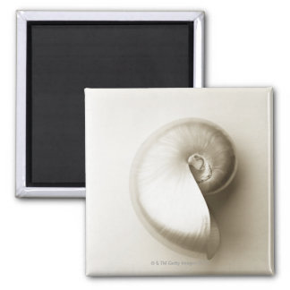 Pearlised nautilus sea shell 2 2 inch square magnet