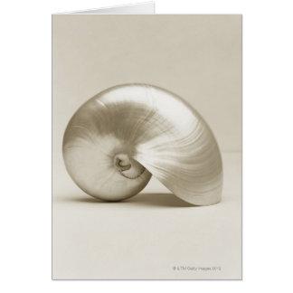 Pearlised nautilus sea shell card