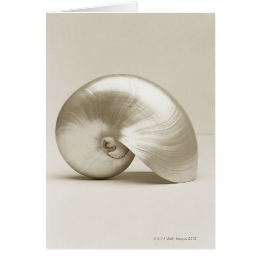 nautilus shell gifts t shirts art posters other gift ideas zazzle. Black Bedroom Furniture Sets. Home Design Ideas