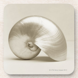 Pearlised nautilus sea shell drink coaster