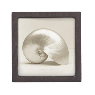 Pearlised nautilus sea shell keepsake box