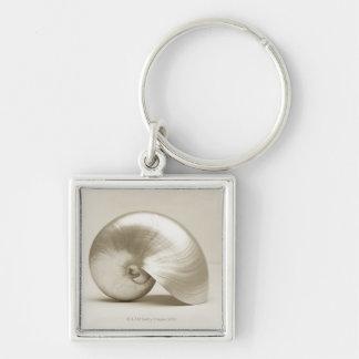 Pearlised nautilus sea shell keychain