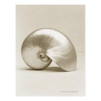 Pearlised nautilus sea shell post card