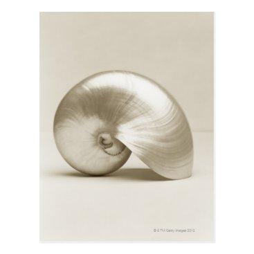prophoto Pearlised nautilus sea shell postcard
