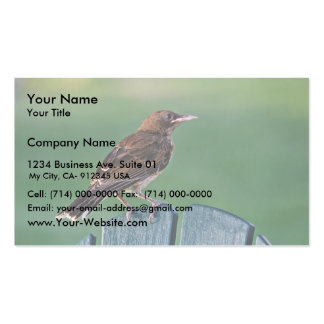 Pearly-eyed Thrasher (Puerto Rico) Business Card Template