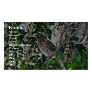 Pearly-eyed Thrasher (Puerto Rico) Business Card
