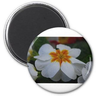 Pearly Primrose Magnet
