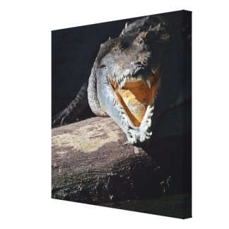 Pearly Whites Wrapped Canvas Print