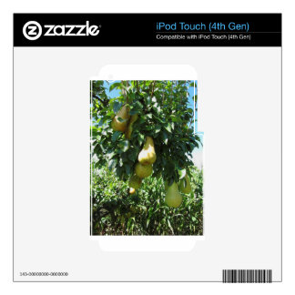 Pears on tree branches decal for iPod touch 4G
