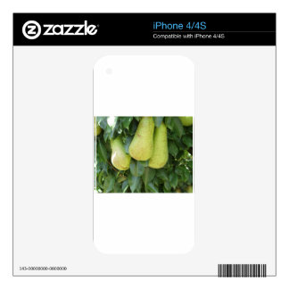 Pears on tree branches decal for the iPhone 4S