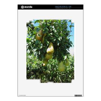 Pears on tree branches decals for iPad 2