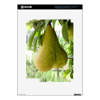 Pears on tree branches iPad 3 decal