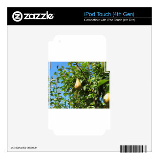 Pears on tree branches iPod touch 4G skins