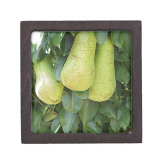 Pears on tree branches jewelry box